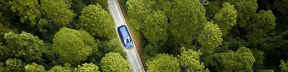 car in the center of a forest
